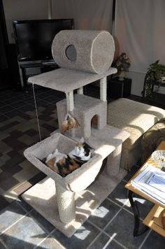 diy cat tower - The higher it goes, the happier he is Diy Cat Tower, Cat Castle, Cat Towers, Cat Enclosure, Dog Feeder, Cat Room, Cat Condo, Pet Furniture, Pet Beds