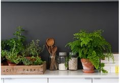 wooden spoons, plants, jars and crates