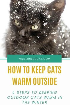 How to Keep Cats Warm Outside: 4 Steps to Keep Outdoor Cats Warm This Winter Outside Cat Shelter, Outside Cat House, Feral Cat Shelter, Outdoor Cat Shelter, Cats Outside, Outdoor Cats, Feral Cats, Cat Shelters For Winter, Cat Shack