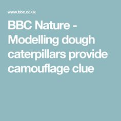 BBC Nature - Modelling dough caterpillars provide camouflage clue