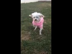 Lizzy walks on grass for the first time