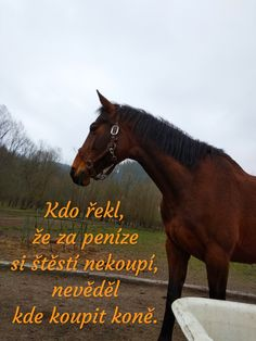 Lovers, Horses, Humor, Quotes, Life, Animals, Quotations, Animales, Animaux