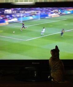 a kitten watching soccer  #Elclassico #cat