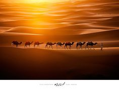 In this beautiful capture by Ingeun Nam, we see a group of camels crossing Erg Chebbi, located in the Moroccan territory of the mighty Sahara Desert.
