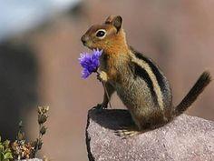 Squirrel !!