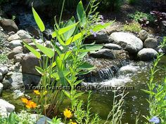 Garden Ponds and Waterfalls A water feature makes a landscape interesting
