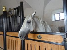 You don't have to be a lover of horses or history to visit Lipica, Slovenia. Lipica is the home to the famous Lipizzaner Stud Farm. Lippizaner, Spanish Riding School, Stud Farm, Horse Rearing, Pony Rides, White Horses, Horse Farms, Pegasus, Dressage