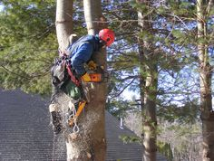 We have the right equipment and experience to ensure your tree is being safely and efficiently removed. Our main areas of focus for our #tree_removal services in the Northern Beaches and North Shore area, but we offer our services in any surrounding areas in #Sydney.