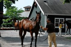 Demand for New York-Bred Horses Increases Dramatically - WSJ