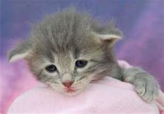 How to make a baby kitten gain weight?Here are 4 steps. Follow me step by step.