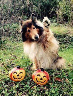 Happy Halloween Lassie! by hermio.deviantart.com on @deviantART