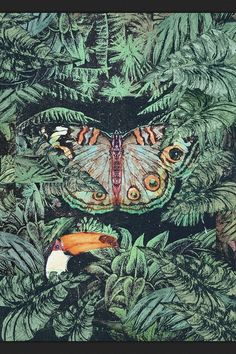 colourful jungle illustrations - Pesquisa Google