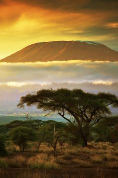 Spectacular view of Mount Kilimanjaro from Amboseli in Kenya. The mountain looks like it's floating on a cloud into a golden sunset.