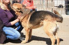 Pin Von Sara Bri Auf Shop Pets4homes Mustangs Tierheim Tiervermittlung Und Tiere