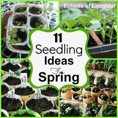 DIY:: 11 Seedling Ideas for Spring