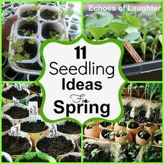 DIY:: 11 Seedling Ideas for Spring