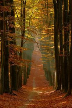The post autumn scenery appeared first on Trendy. Fall Pictures, Nature Pictures, Landscape Pictures, Beautiful Places, Beautiful Pictures, Forest Path, Autumn Forest, Autumn Scenes, Autumn Aesthetic