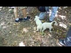 Cute puppies by the river Nemouta Greece (C major prelude Bach)