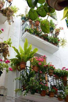 Flower in balcony
