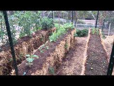 ▶ My straw bale garden - YouTube