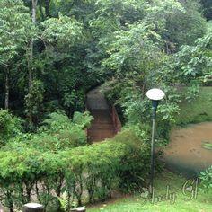 Bosque do Alemão Parque de Curitiba