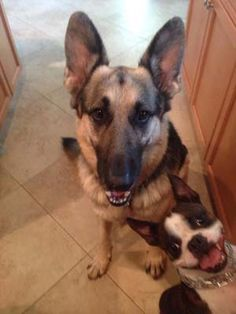 We Can't Get Enough of These Photobombing Dogs | WOOFipedia by The American Kennel Club