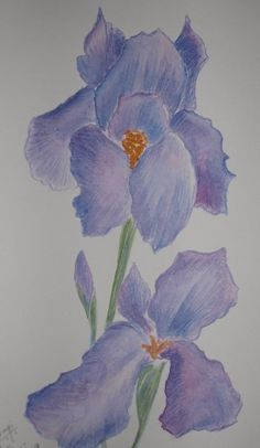 1000 images about my iris garden on pinterest irises. Black Bedroom Furniture Sets. Home Design Ideas
