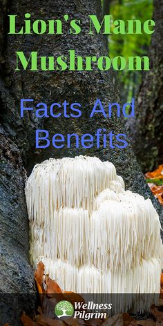 Lion's Mane mushrooms not only have culinary uses but offer a large list of health benefits including the possible prevention of Alzheimer's disease and improvements in ischemic stroke, Parkinson's disease, and depression. Herbs For Sleep, Tea Before Bed, Acute Respiratory Distress Syndrome, Herbs List, Herbs For Health, Lion Mane, Alzheimers, Natural Herbs, Herbal Medicine