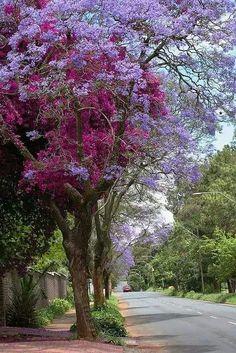 Весна в Йоханнесбурге