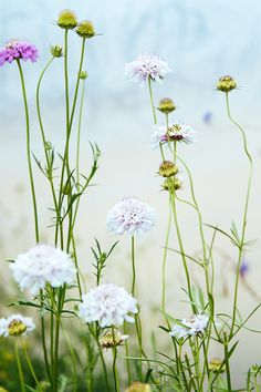 Looking ahead (via Bloglovin.com )