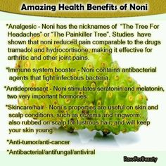 Noni juice is derived from the fruit of the Morinda citrifolia tree indigenous to Southeast Asia, Australasia, and the Caribbean. Noni juice has been promoted as a cure for a number of human diseases. Noni Juice Benefits, Juicing Benefits, Health Benefits, Fruit Benefits, Juicing For Health, Health And Nutrition, Health Tips, Health And Wellness, Health Fitness