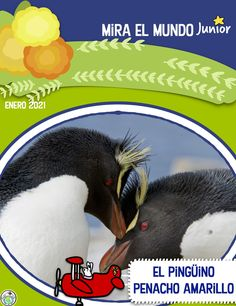 The Jan 2021 issue of our magazine in Spanish for kids features el pingüino penacho amarillo, inhabiting Argentina & Chile. Includes facts about the penguin, a mini book, word wall cards, finger puppets and more! Mundo de Pepita, Resources fore Teaching Languages to Children #elementaryspanish #penguins #pingüinos #spanishforkids