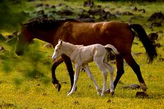 Wild Horses and Burros Are Symbols of the American West That Have ...