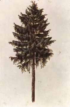 Pine,   1495-97,   Watercolour and gouache on paper,   295 x 196 mm,    British Museum, London