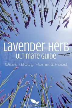 Lavender Herb Ultimate Guide (learn how to use lavender for home, body, AND food)- Scratch Mommy