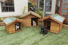 Small dog kennels by Matt's Homes and Outdoor Designs http://www.mattshomes.com.au