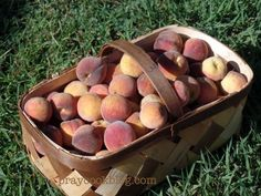 Summer's Peach Bount
