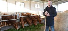 La scommessa vinta di Marco Asara, nell'empireo dei produttori di carne. Via il mangime, solo erba per le sue vacche