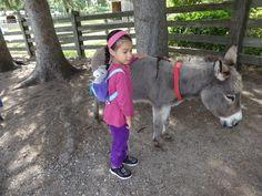Style Challenge and the Donkey Sanctuary The Donkey, Style Challenge, Grandchildren, Goats, Challenges, Animals, Animais, Animales, Animaux
