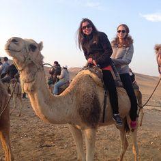 #camel #desert #taglit #birthright #Israel #GetMoreIsrael