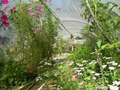 Alternatives semer des fleurs pour proteger votre potager 1