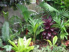 tropical garden by the fence.. lots of different plants in.. bird nest at the front