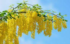 Resultado de imagen para imagenes de flores hermosas para fondo de pantalla