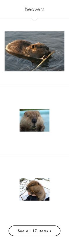 """""""Beavers"""" by iris913 ❤ liked on Polyvore featuring Beavers"""