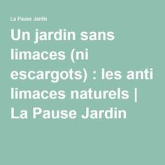 Un jardin sans limaces (ni escargots) : les anti limaces naturels | La Pause Jardin