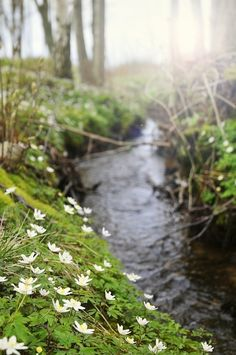 Softly babbling stream..
