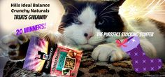 Cat Wisdom 101 | Hills Ideal Balance Crunchy Naturals Treats Giveaway: Twenty Winners!