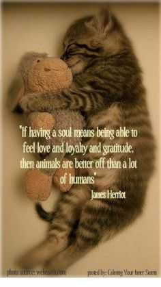 """ALL animals -- human AND nonhuman -- want to love, be loved, and enjoy their freedom. BE VEGAN and end the part YOU play in upholding """"acceptable"""" violence, animal cruelty, and exploitation inside cultural """"norms"""" of society. Acknowledge the VICTIMS of your eating habits, etc., and turn your heart towards justice rather than injustice. It's never too late to learn reverence for life. www.vegankit.com and www.freefromharm.org"""