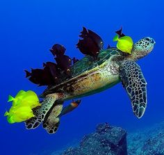 The Baby Turtle | Encyclopaedia of Babies of Beautiful Wild Animals