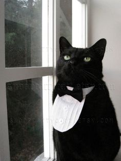 For formal occasions:  Cat Tuxedo  Classic Black Tie by SnoopCattyCatt on Etsy